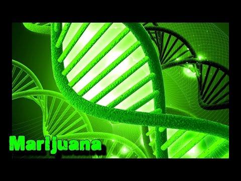 Genetically Modified Marijuana