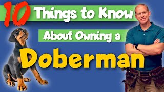 What You Need to Know BEFORE Getting a Doberman