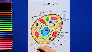 How to draw and color an animal cell - labeled science diagram