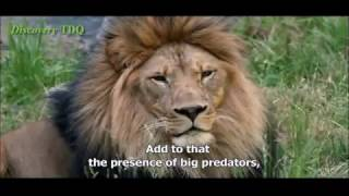 Nature Animal Documentary [Part 02] - English Subtitles