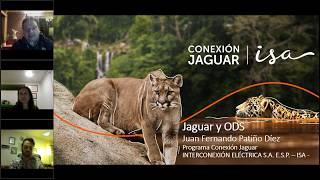 Webinar: La senda del jaguar hacia los objetivos de desarrollo sostenible.