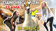 DANCING WITH LLAMA'S IN PUBLIC CHALLENGE!!