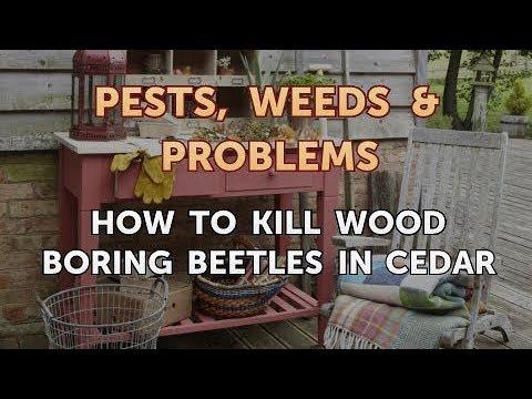 How to Kill Wood Boring Beetles in Cedar