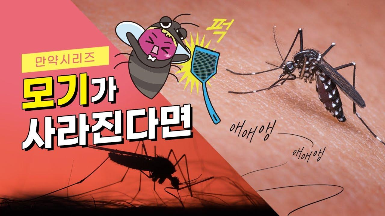 만약 모기가 사라진다면 어떻게 될까? (feat. 흡혈모기)