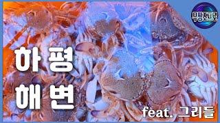 원투낚시 / 동해 / 하평해변 / 바다낚시 / 깨다시꽃…