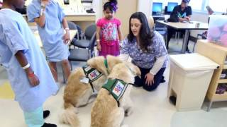 Pet-Assisted Therapy at Children's Health