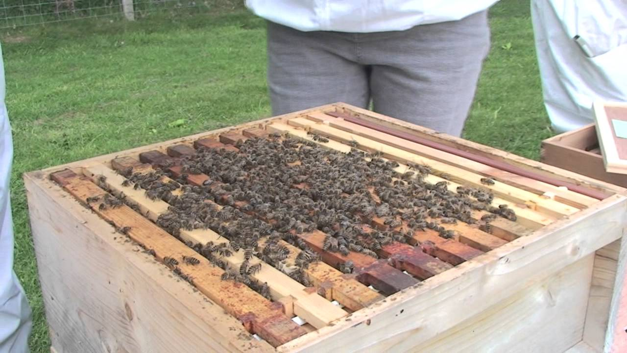 opening the bee hives hexham beekeepers association apiary youtube