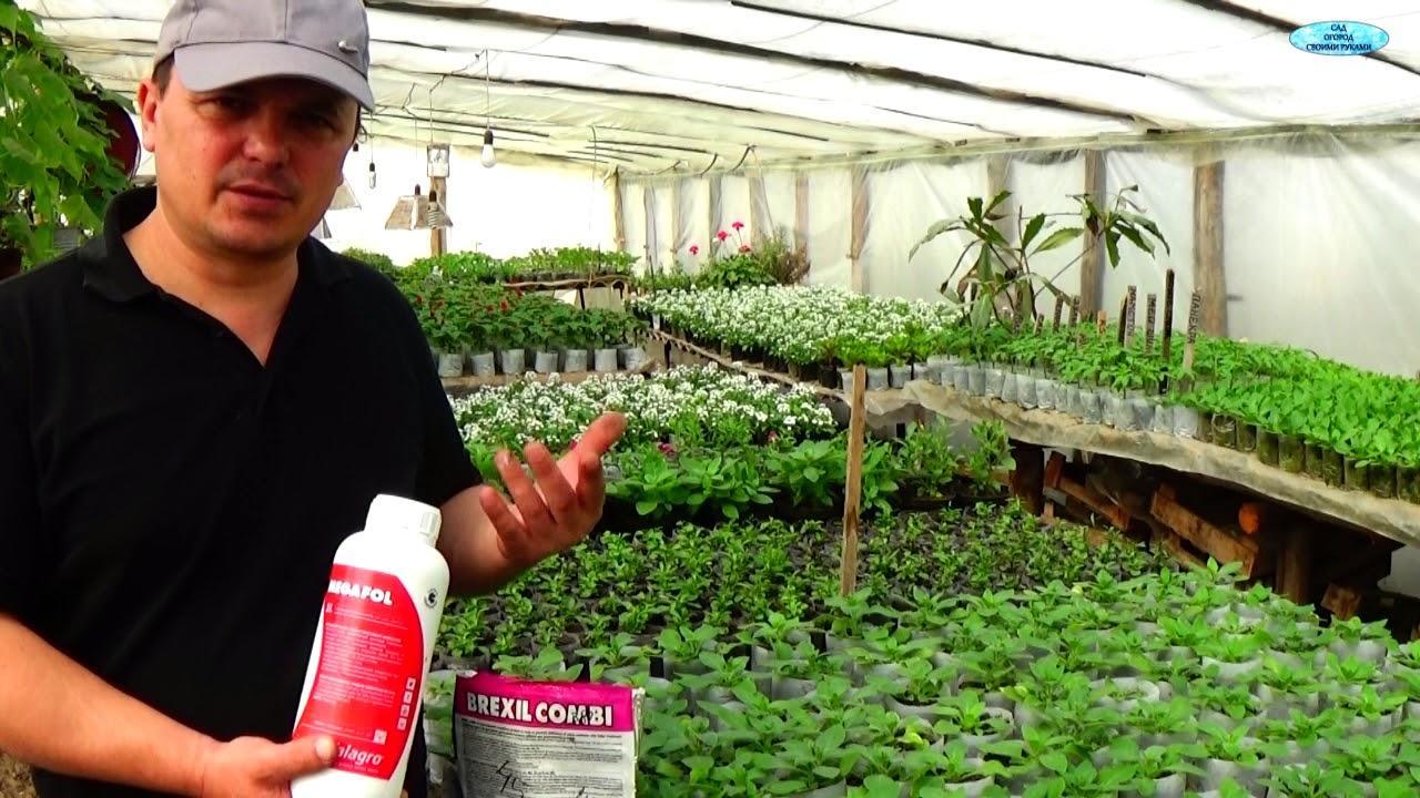 Правильное проведение листовых обработок растений.