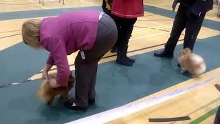 fylde dog show 4