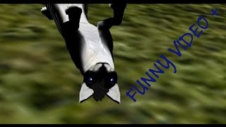 ~ Feral Heart ~ Funny video +