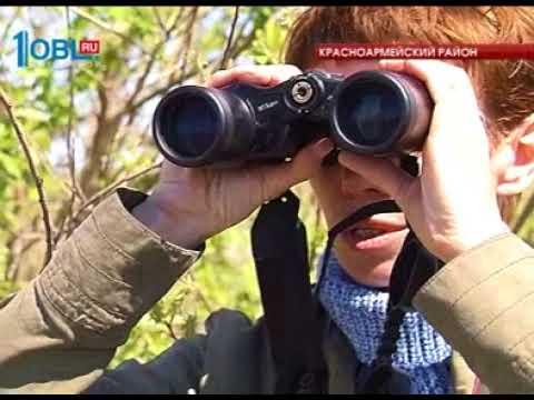 В Челябинскую область прилетели птицы занесенные в красную книгу