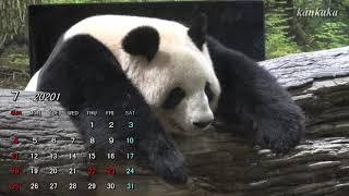 2021年7月のカレンダー (Giant panda Calender  2021.7)