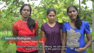 Save Tiracol; Save Goa: Our Cashew Plantations are Our Lives