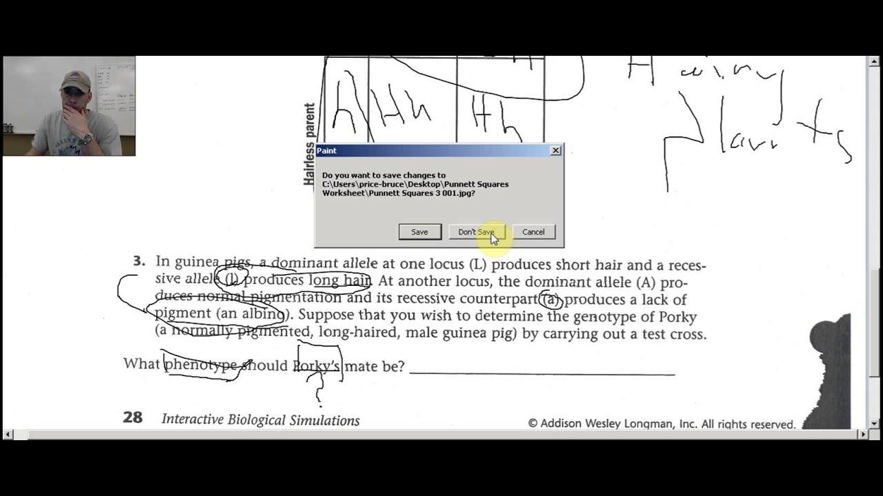 Punnett Squares Worksheet HELP - YouTube