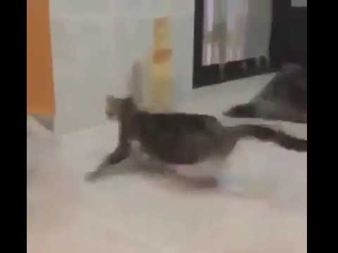 Cats scared by loud spongebob music