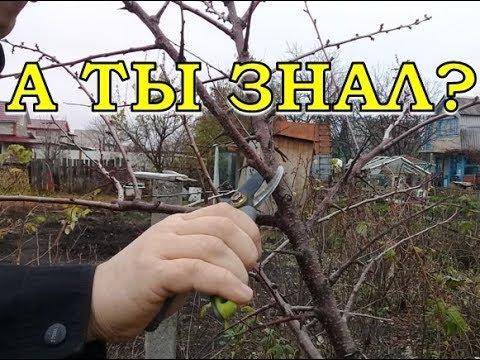 ОСЕНЬ: обрезка плодовых деревьев