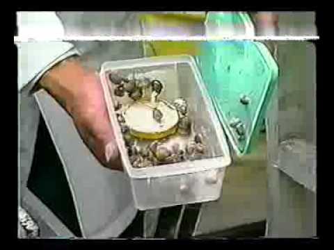 Cria de caracol youtube for Como hacer un criadero de cachamas