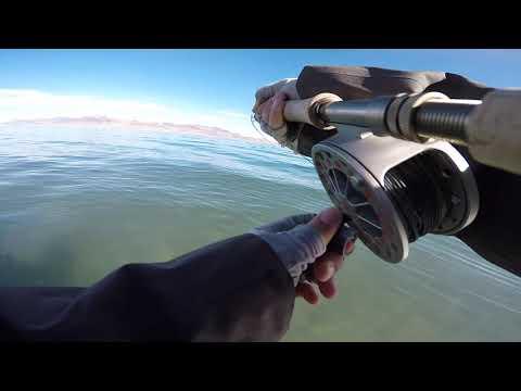 Pyramid Lake Fly Fishing November 11th 2019