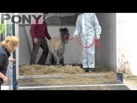 PONY exclusive! Watch how World Horse Welfare rescue ponies! | PONY Magazine