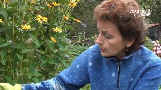 видео Посадка и пересадка лилий