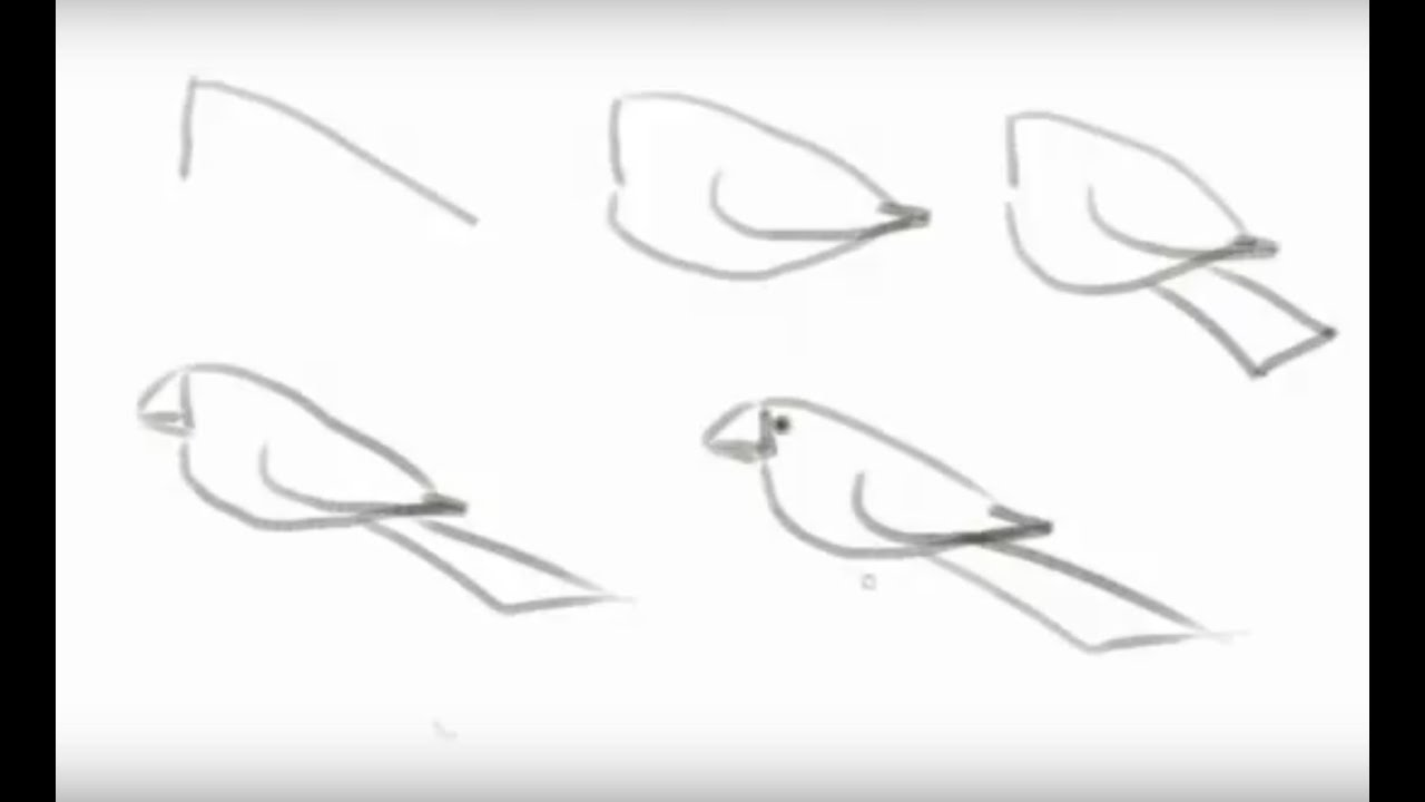 How To Draw A Bird Easy Steps For Beginners Youtube
