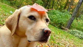 Stella's Most Pupular Leaf Pile Videos (So Far)
