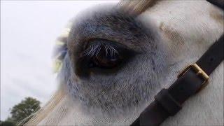 citation équine