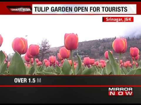 Take a look at Asia's largest tulip garden in Srinagar - The News