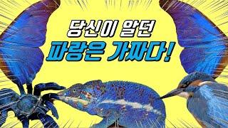 동물의 색에 숨겨진 놀라운 비밀!|진짜 파란 동물은 있…