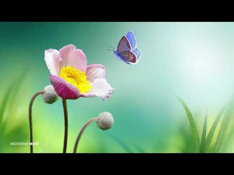 """Beautiful Morning"" Meditation Music | Indian Flute Music, Positive Energy Music, Yoga Music"