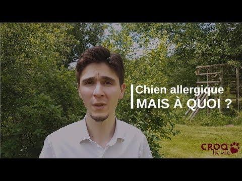 3d6c91b3e9813 Allergie du chien : oui, mais allergique À QUOI ?