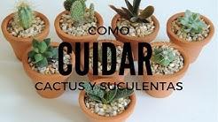 COMO CUIDAR SUCULENTAS Y CACTUS DENTRO DE CASA (HD)