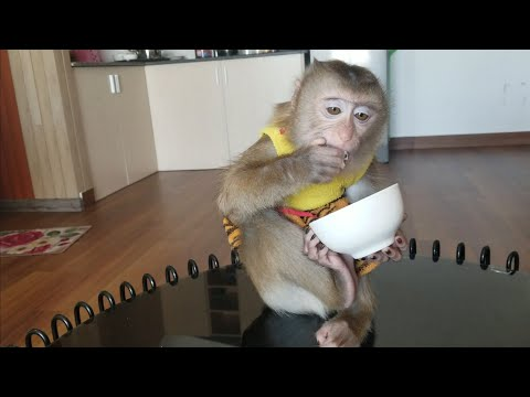 Monkey Baby Nui | Nui held the rice bowl herself