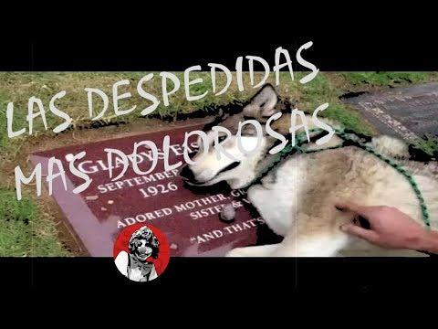 LAS 10 DESPEDIDAS MAS DOLOROSAS Y DESGARRADORAS DE LOS ANIMALES A SUS DUEÑOS (PARTE 1) | OSCAR JACK