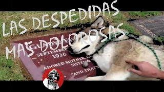 Las 10 despedidas más dolorosas de los animales a sus dueños (Parte 1) | Oscar Jack