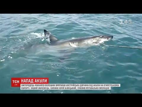 На Єгипетському курорті українець врятував від акули 20-річну туристку з Австрії