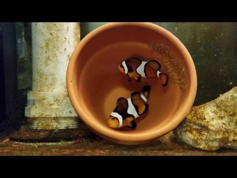 JTE Studios Presents: Clownfish