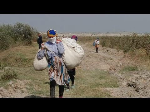 Uzbekistan Forces Kids to Work in Cotton Fields, the World Bank Knows