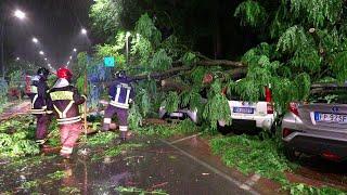 Maltempo a Milano, diversi alberi sono caduti sulle auto in sosta