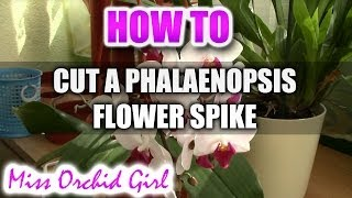 How to cut a Phalaenopsis Orchid flower spike