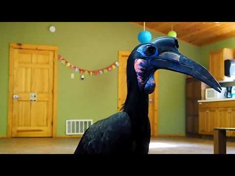 hornbill keeper talk cheyenne mountain zoo pt 2