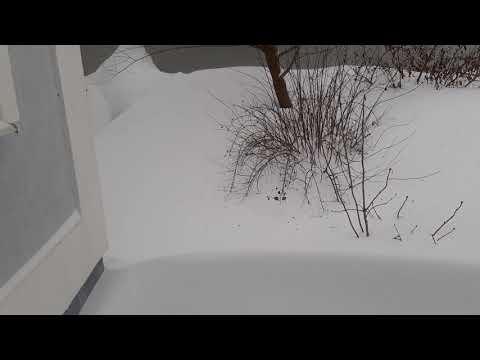 Нас занесло снегом! караул!