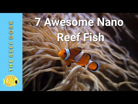 Top 7 Nano Reef Fish