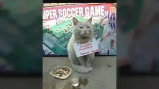 D:Коты бывают разные)))))