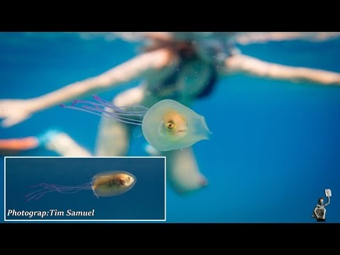 This Fish Got Itself Trapped Inside A Jellyfish