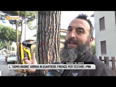 """TG BASSANO (22/01/2019) - L' """"UOMO RAGNO"""" ARRIVA IN QUARTIERE FIRENZE PER TESTARE I PINI"""
