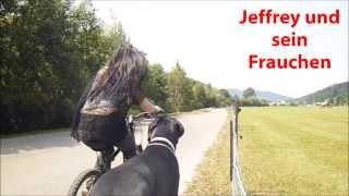 Jeffrey the Great Dane, Deutsche Dogge vielen Dank für 2000 Likes!