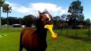 Caballo juega con un pollo de hule que le da mucha felicidad丨CGTN en Español