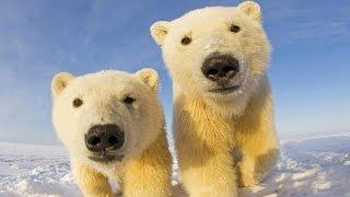 10 Самых больших животных в мире! Кузница Фактов.