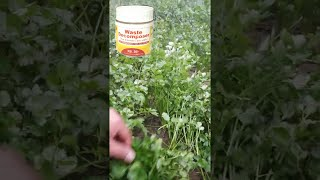 Waste decomposer shocking result every farmer must watch